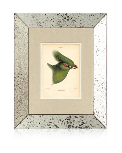 1854 Mirror Frame Bird Print I