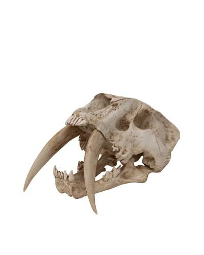 Bliss Studio Prehistoric Predator Skull