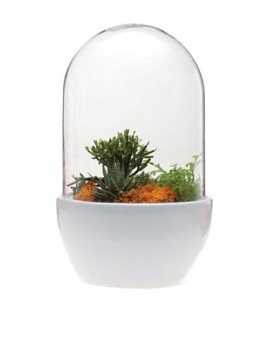 Chive White Pill Terrarium
