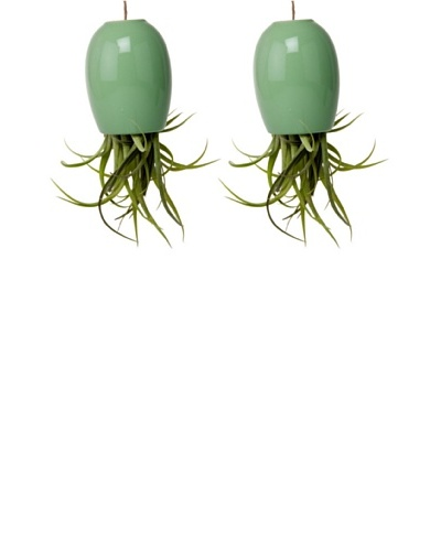 Chive Set of 2 Peridot Large Plant Shades