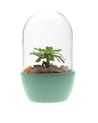 Chive Green Pill Terrarium