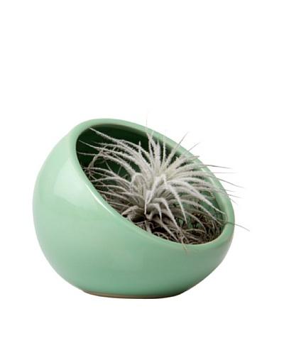 Chive Green Half Moon Terrarium Bowl