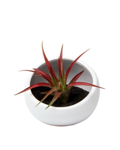 Chive White Half Moon Terrarium Bowl