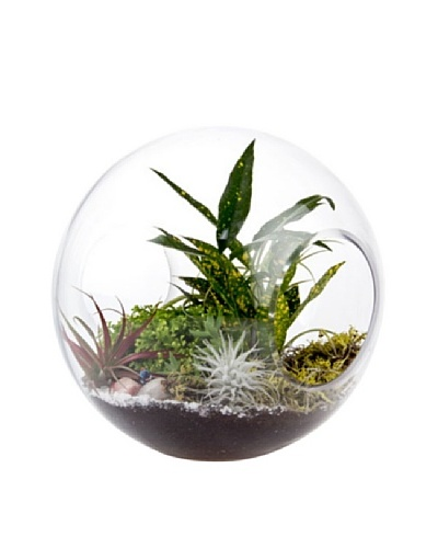 Chive Glass Wind Tunnel Terrarium