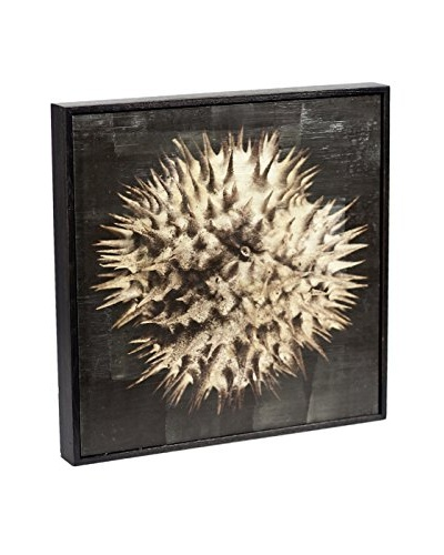 Chris Dunker for Phylum Design Datura #2, Encaustic Photograph
