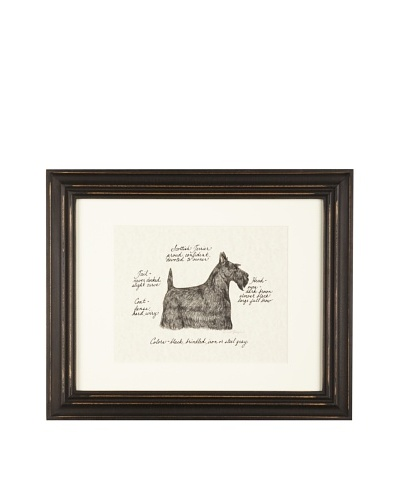 Clapper Hollow Scottish Terrier