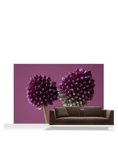 Clive Nichols Photography The Purple Flowers of Allium Sphaerocephalon Mural, Standard, 12' x 8'