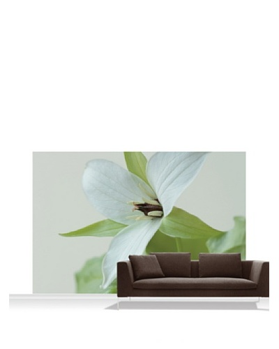 Clive Nichols Photography The White Flower of Trillium Simile Mural, Standard, 12' x 8'