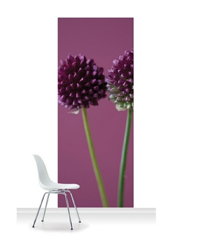 Clive Nichols Photography The Purple Flowers of Allium Sphaerocephalon Standard Mural