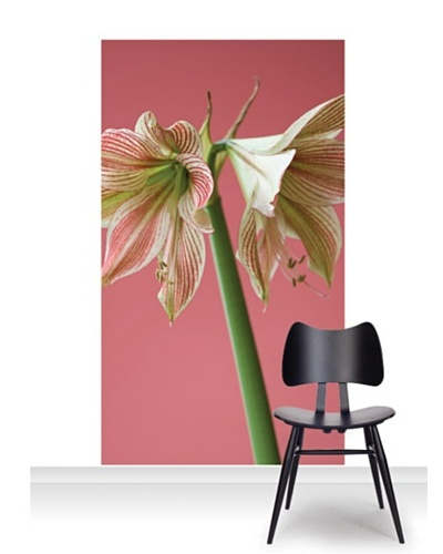 Clive Nichols Photography Exotic Star Standard Mural [Accent]