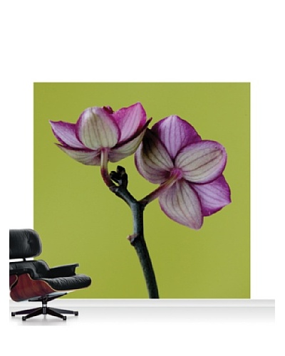 Clive Nichols Photography A Doritaenopsis Orchid III Mural, Standard, 8' x 8'