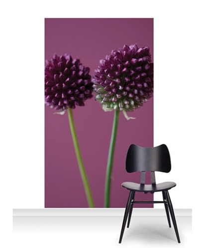 Clive Nichols Photography The Purple Flowers of Allium Sphaerocephalon Mural [Accent]