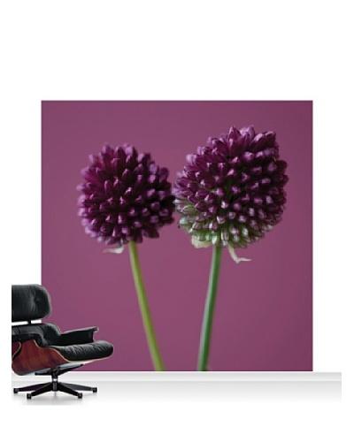 Clive Nichols Photography The Purple Flowers of Allium Sphaerocephalon Standard Mural - 8' x 8'