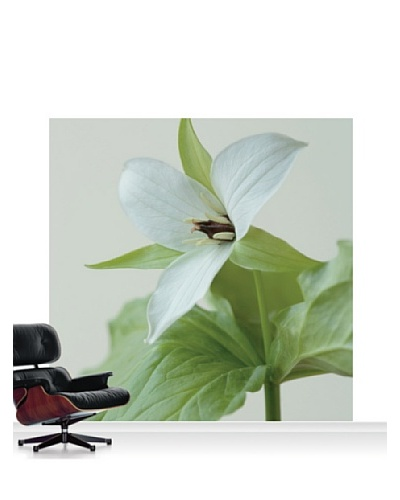 Clive Nichols Photography The White Flower of Trillium Simile Standard Mural - 8' x 8'
