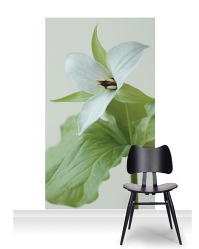Clive Nichols Photography The White Flower of Trillium Simile Standard Mural