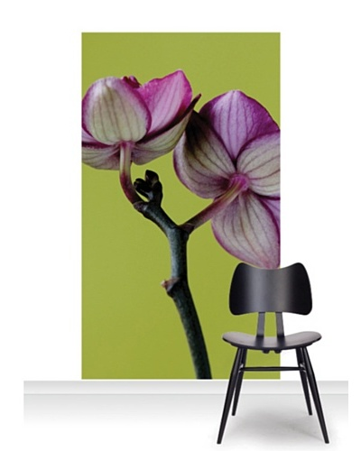 Clive Nichols Photography A Doritaenopsis Orchid III Standard Mural [Accent]