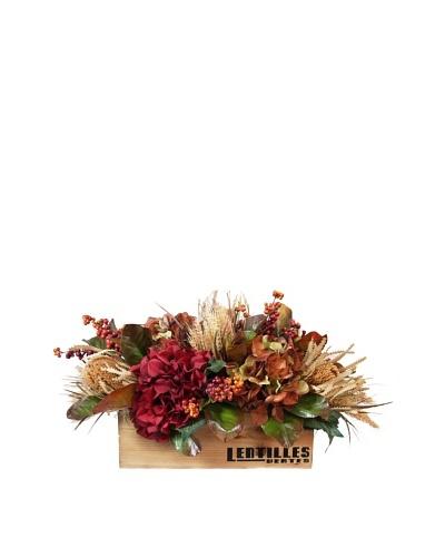 Creative Displays Lentiles Box of Hydrangea