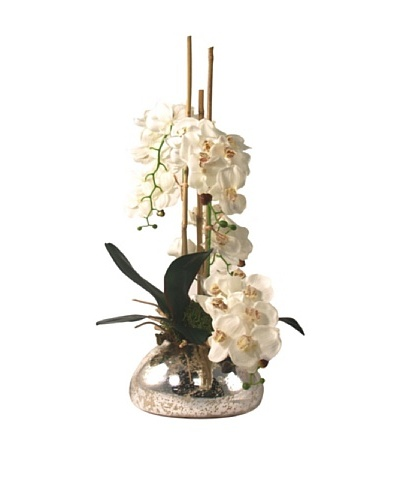 Creative Displays Small White Orchid in Mercury Vase