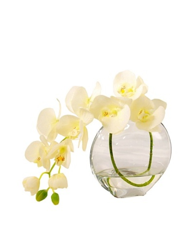 Creative Displays White Orchid in Acrylic Water
