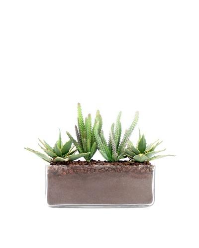 Creative Displays Cactus in Rectangular Glass Planter