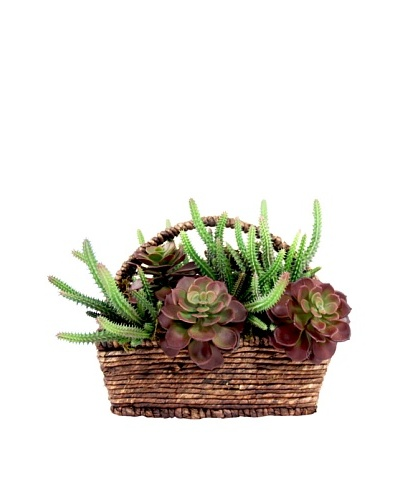 Creative Displays Assorted Cactus in Basket