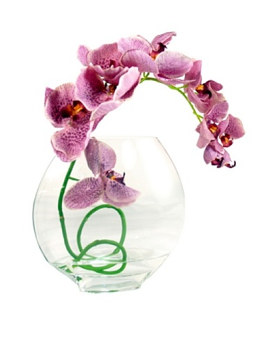 Creative Displays Lavender Orchid in Acrylic Water