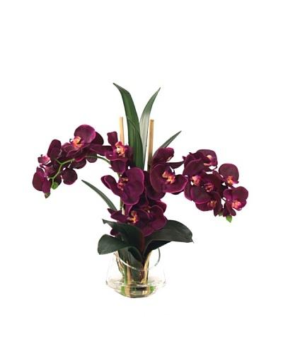 Creative Displays Purple Orchid in Half Moon Glass