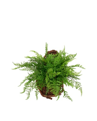 Creative Displays Fern Wall Basket