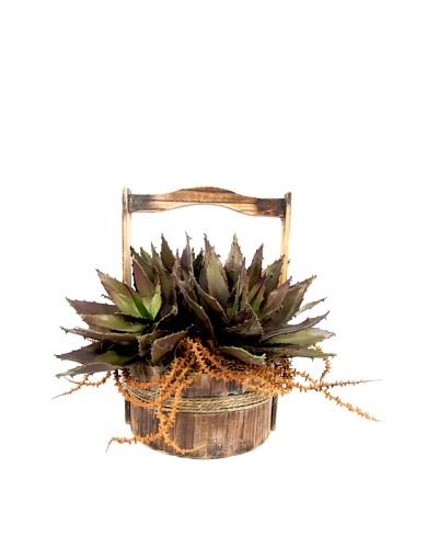 Creative Displays Succulents In Wooden Basket