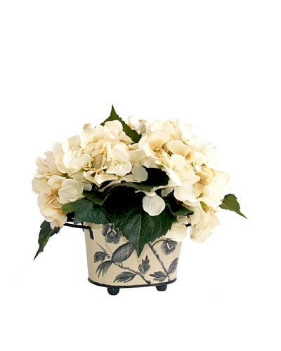 Creative Displays Cream Hydrangea in Tall Container
