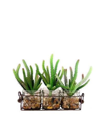 Creative Displays Cactuses in Rectangular Glass Planter