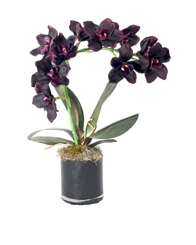 Creative Displays Purple Orchid in Black Cylinder