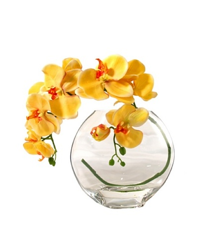 Creative Displays Gold Orchid in Acrylic Water