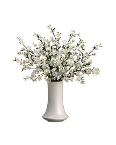 Apple Blossom Plant, White