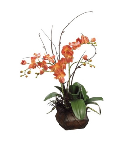 Phalaenopsis and Twig In Metal Container
