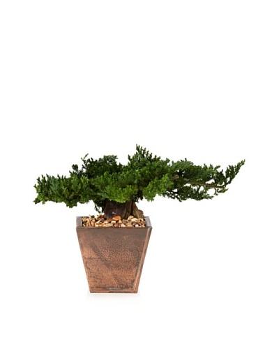 Forever Green Art Preserved Traditional Bonsai
