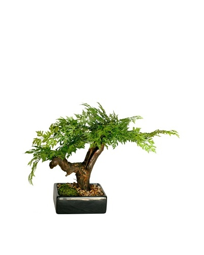 Forever Green Art Handmade Aralia Bonsai Tree