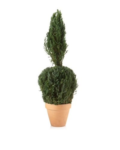 Forever Green Art Juniper Ball Cone Topiary