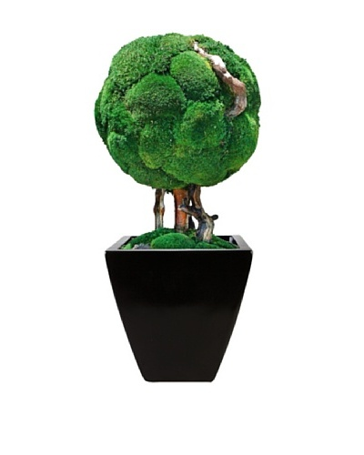 Forever Green Art Handmade Single Moss Ball Bonsai Tree