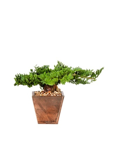 Forever Green Art Handmade Traditional Bonsai Tree