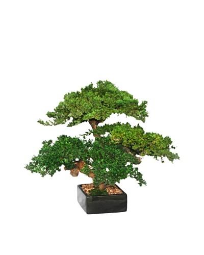 Forever Green Art Handmade Triple Monterey Bonsai Tree