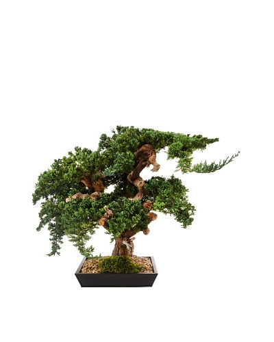 Forever Green Art Handmade Large Monterey Bonsai Tree