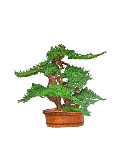 Forever Green Art Handmade Vintage Bonsai Tree