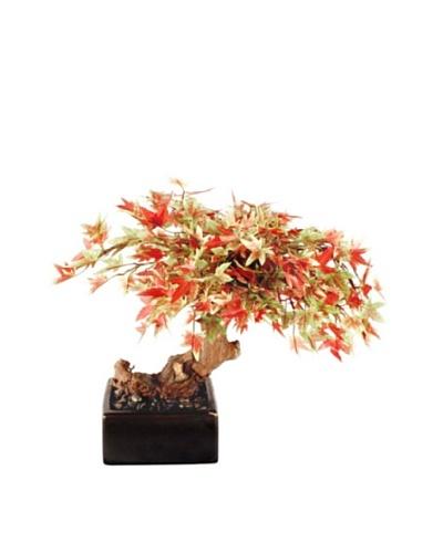 Forever Green Art Handmade Japanese Maple Bonsai Tree
