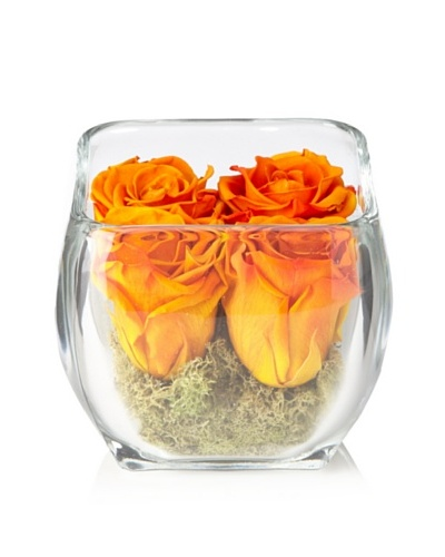 Glass Rose Cube - Orange