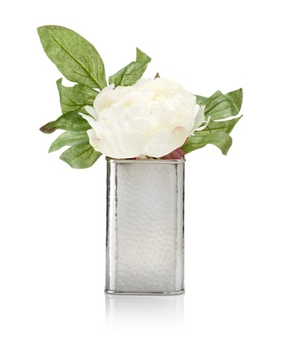 Winward Cream Peony In Silver Box