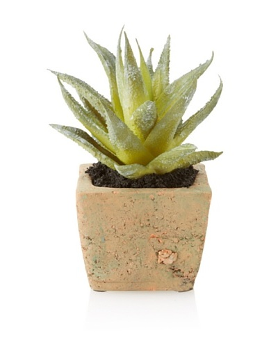 New Growth Designs Aloe Plant in Natural Clay Pot