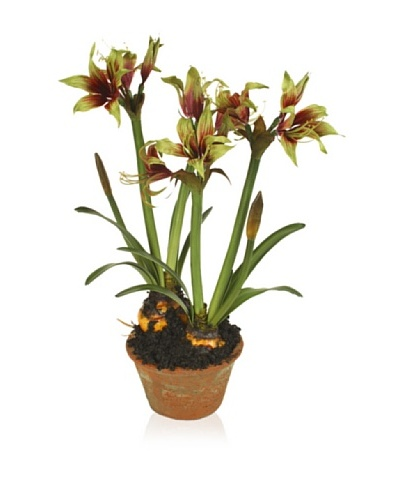 New Growth Designs Faux Exotic Amaryllis Bulbs