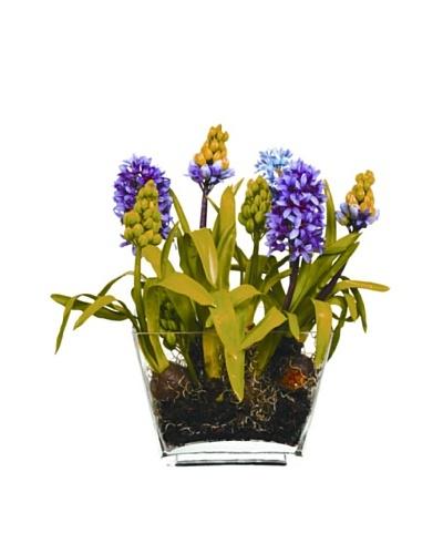 Winward Hyacinth in Glass Planter