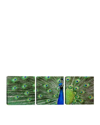 iCanvasArt Color Bakery Collection: Aqua Peacock Panoramic Giclée Triptych